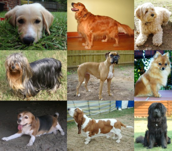 Collage_of_Nine_Dogs